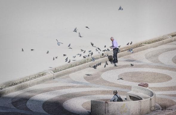 Tel Aviv, Israel, beach, promenade, pigeons, birds, feeding, man feeding birds,