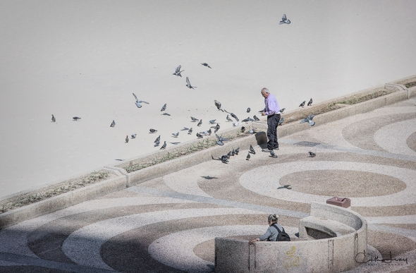 Tel Aviv, Israel, beach, promenade, pigeons, birds, feeding, man feeding birds,