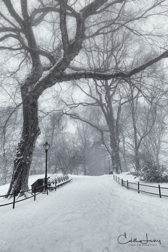 New York, NYC, Manhattan, blizzard, snow, storm, cyclone bomb, Central Park